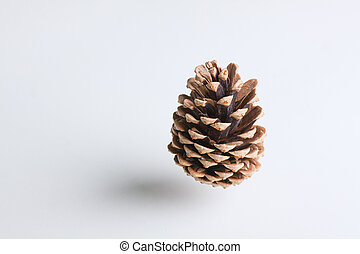 Pine cone in the air on a white background