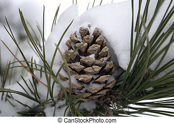 Pine Cone in the Snow