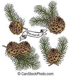 Pine cone set with robbon in vintage style, vector...