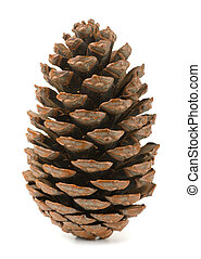 Pine cone - Single pine cone isolated on white