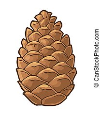 Pine cone. Vector vintage color flat illustration isolated on white