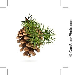 Pine cone with branch, isolated on white background