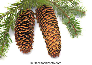 Pine Cones - A couple of pine cones on white background