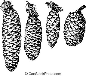 Pine cones - Four different cones isolated on white...