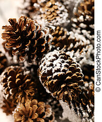 Pine cones in snow on a tree of fur-tree