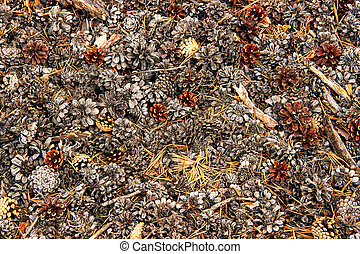 Pine cones lying on the ground