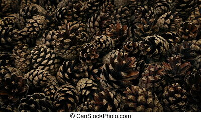 Pine Cones Moving Shot