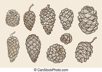 Pine cones of cedar spruce fir christmas tree pine set....