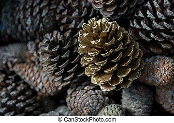 Pine cones of the pine tree