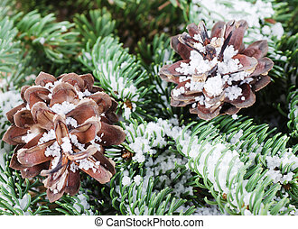 Pine cones on a branch