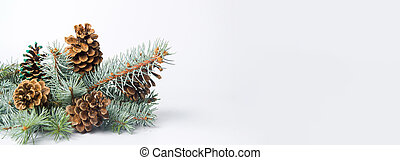 Pine cones on a branch isolated