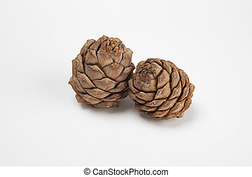 Pine cones on a white background close-up, side view