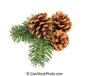 Pine cones on branch - Pine cones with branch on a white...