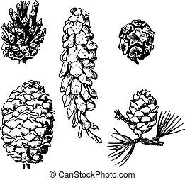 Pine cones - Some different pine cones isolated on white ...