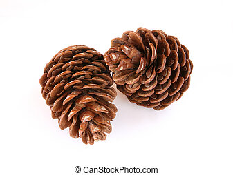 Pine cones - Two pine cones on white background.