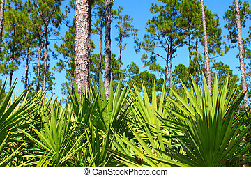 Pine Flatwoods - Florida - The beautiful pine flatwoods of ...