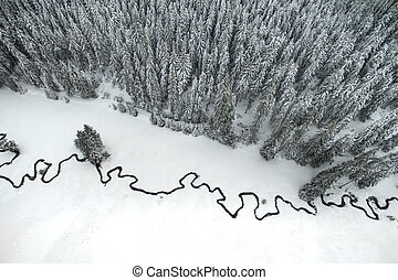 Pine Forest and Meandering Stream - Aerial winter landscape...
