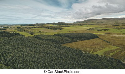 Pine forest at green valley aerial. Nobody nature landscape. Rural farmlands at road. Greenery trees