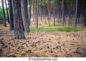 Pine forest. Beauty nature background