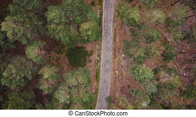 Pine forest from above, fall season, forest road. High ...