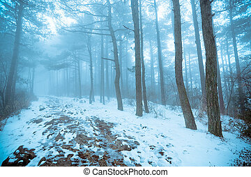 pine forest in fog and snow