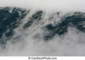 pine forest in mountains with fog. beautiful background.