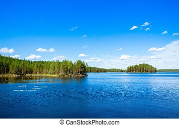 pine forest near the lake