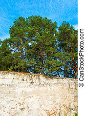 Pine forest on the edge of a sandy cliff. - Beautiful green...
