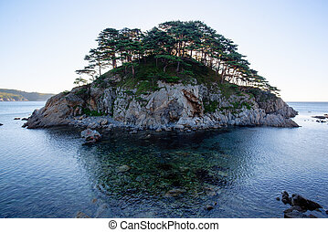 Pine forest tree by the sea