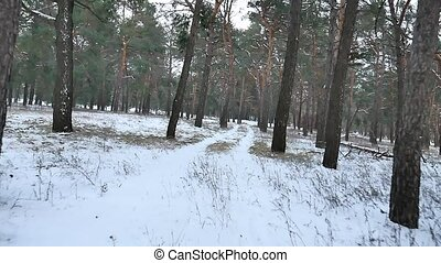 pine forest winter christmas tree snow motion field in winter nature beautiful landscape