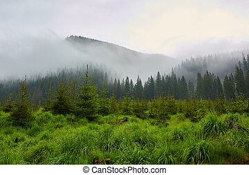 Pine forests on mountains