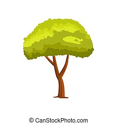 Pine green tree vector icon