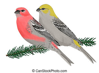 Pine Grosbeak - Pinicola enucleator - pair on spruce