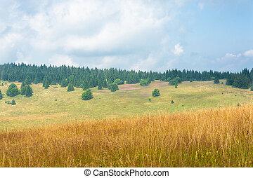 Pine Horizon