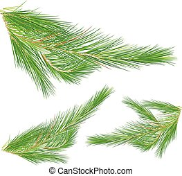 Pine leaves on white background