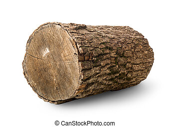 Pine log isolated