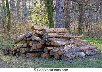 pine logs in a pile on a glade