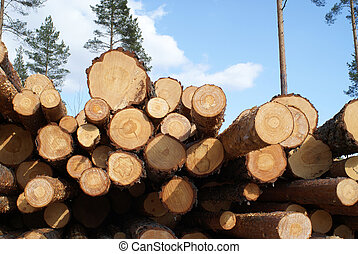 Pine Logs in Forest - A pile of pine logs in forest with...