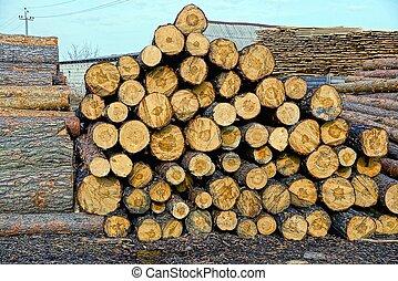 pine logs in the heap