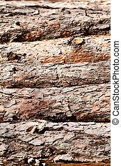 Pine logs texture