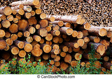 Pine Logs - Two piles of pine logs waiting for ...