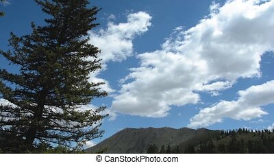 Pine Mountain wind sky Altai