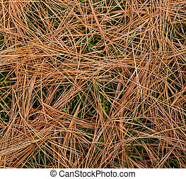 Bed of pine needles on a background of green landscape shrub.
