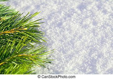 Pine needles on snow - Branch of pine needles lying on snow,...