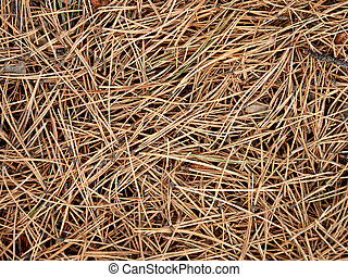 Pine Needles on the Forest Floor