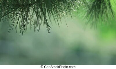 pine needles with copy space