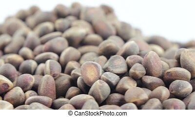 Pine nuts in bulks