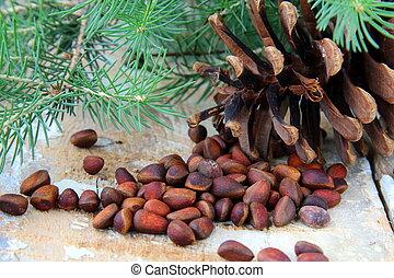 pine nuts, with cedar cones