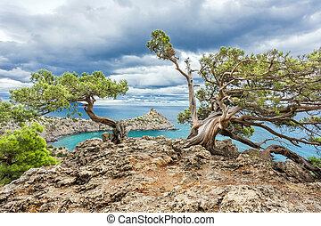 pine on a rock near the sea