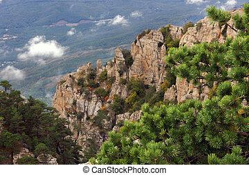 pine on mountains